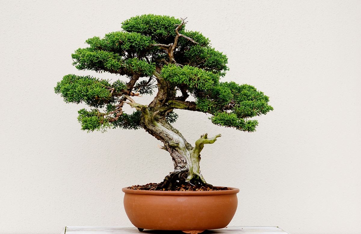 Green Umbrella Bonsai Workshop